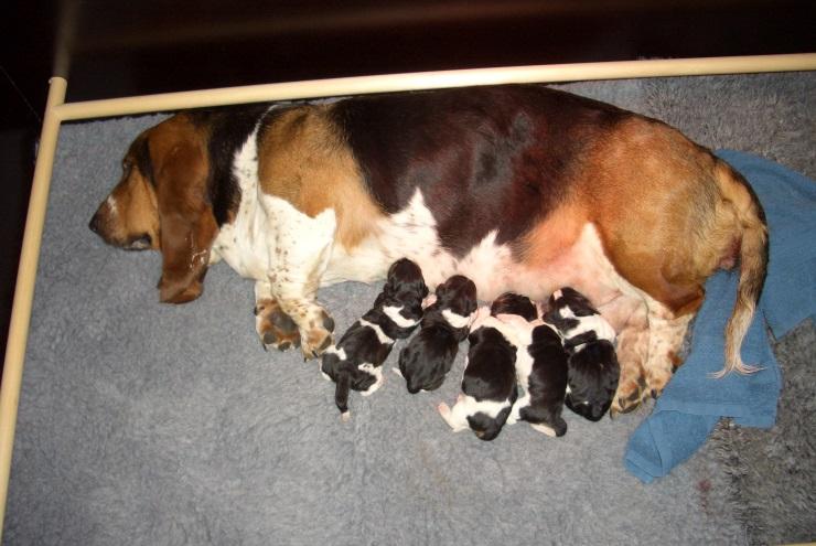 4/2-2014 - 5 nyfødte hvalpe